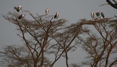 birds at the top of a tree