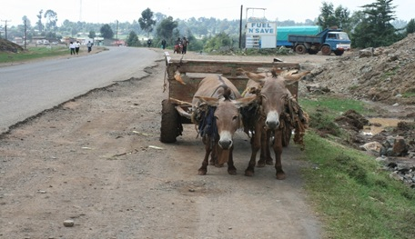 Donkeys carrying a load